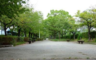 sakuraba-s